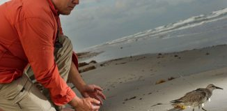 Peter Marra, '85, on shoreline releasing bird with tracking device back to the wild.